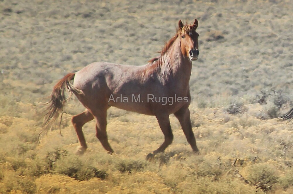 Butte Valley Red by Arla M. Ruggles