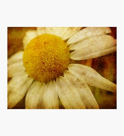 A Daisy Day Fotodruck