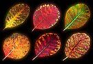 Autumn Glow by Stephen D. Miller