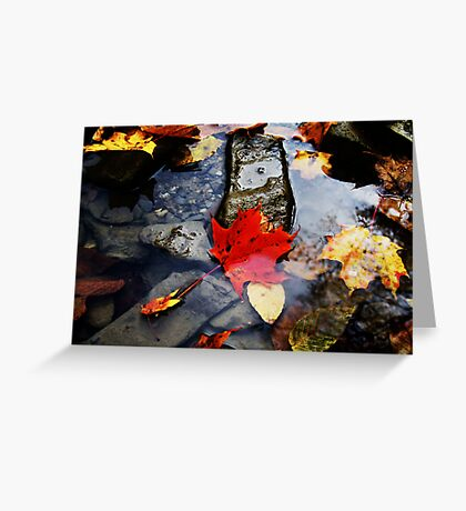 Leaves in the River  Greeting Card