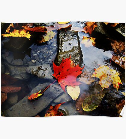 Leaves in the River  Poster