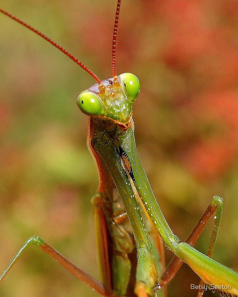 Praying Mantis by Betsy  Seeton
