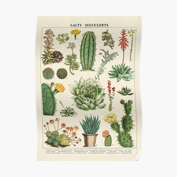 Cacti and Succulents Vintage Botanical Chart Poster