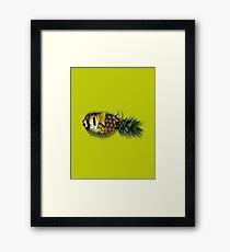 pineapple puffer phish [pppfff!!!] Framed Print