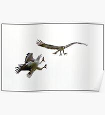 Eagle Attach Poster