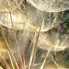 GONE TO SEED by Betsy  Seeton
