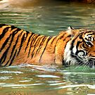 cats do love the water by natalie angus
