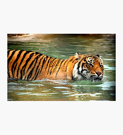 cats do love the water Photographic Print