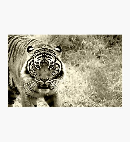 i'm looking at you - sepia Photographic Print
