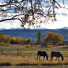 Micki and Dandy by Barb Miller