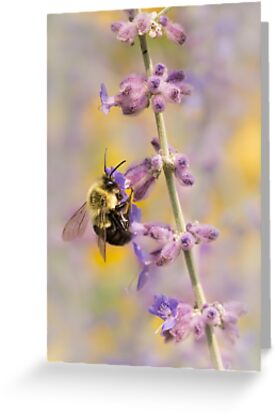 Bumblebee on Russian Sage by Jim  Hughes