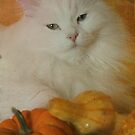 Harvest kitty 2 of 2 by Marie-Eve Boisclair
