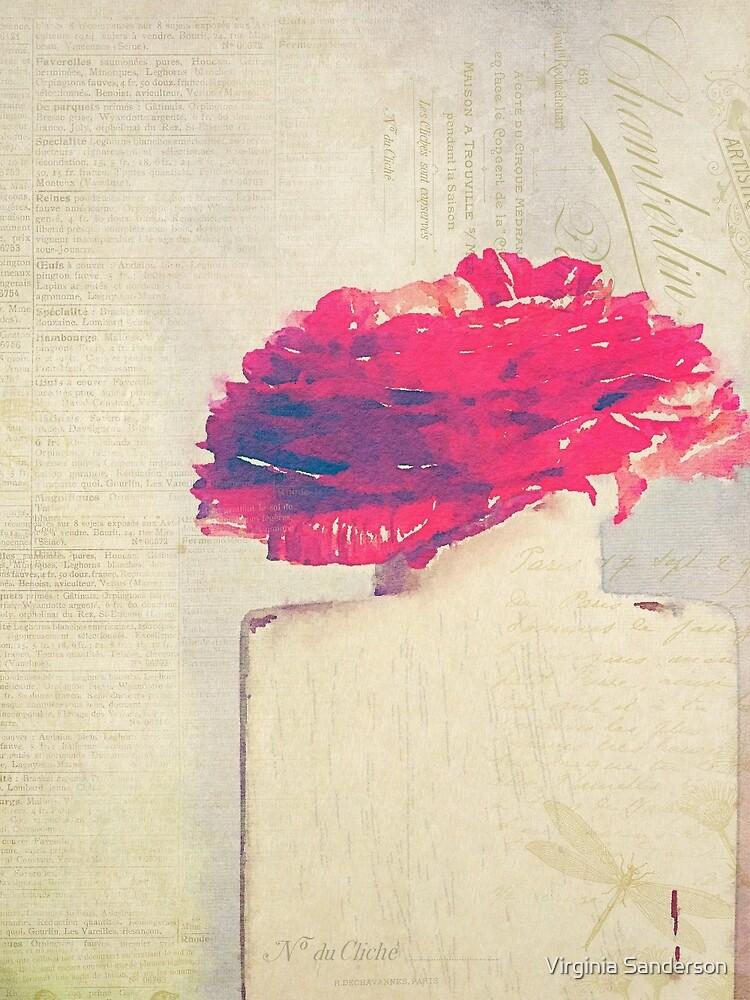 Red Ranunculus Flower by Virginia Sanderson