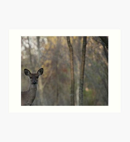 Deer is Proud of his Forest Art Print