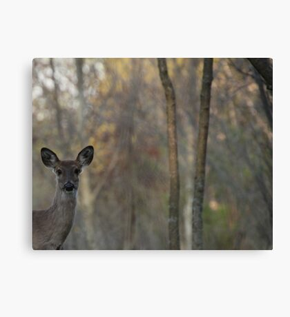 Deer is Proud of his Forest Canvas Print