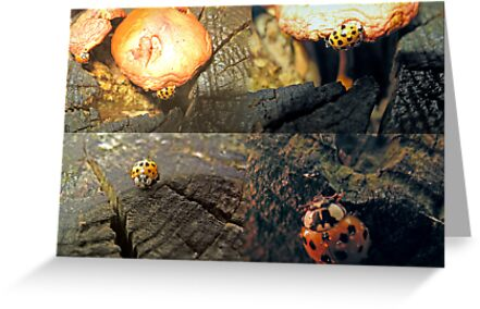 The Ladybug that Wandered by Thomas Murphy