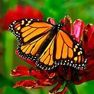 Wings of Beauty by Brenda Burnett