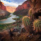 Marble Canyon Cactus by Inge Johnsson