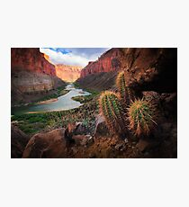 Marble Canyon Cactus Photographic Print
