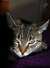 You Dare To Wake Me Again?!  You Must Have A Death Wish!! by jodi payne