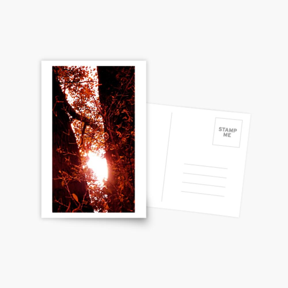 Radiant Rays of Hope Postcard