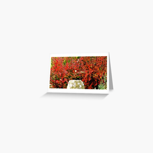 Love That Color! Greeting Card