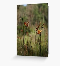 Dunsborough Donkey Orchids and Grasses Greeting Card