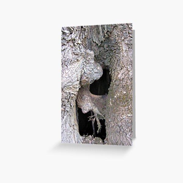 Hollow Elm - Andrew Thamo Greeting Card