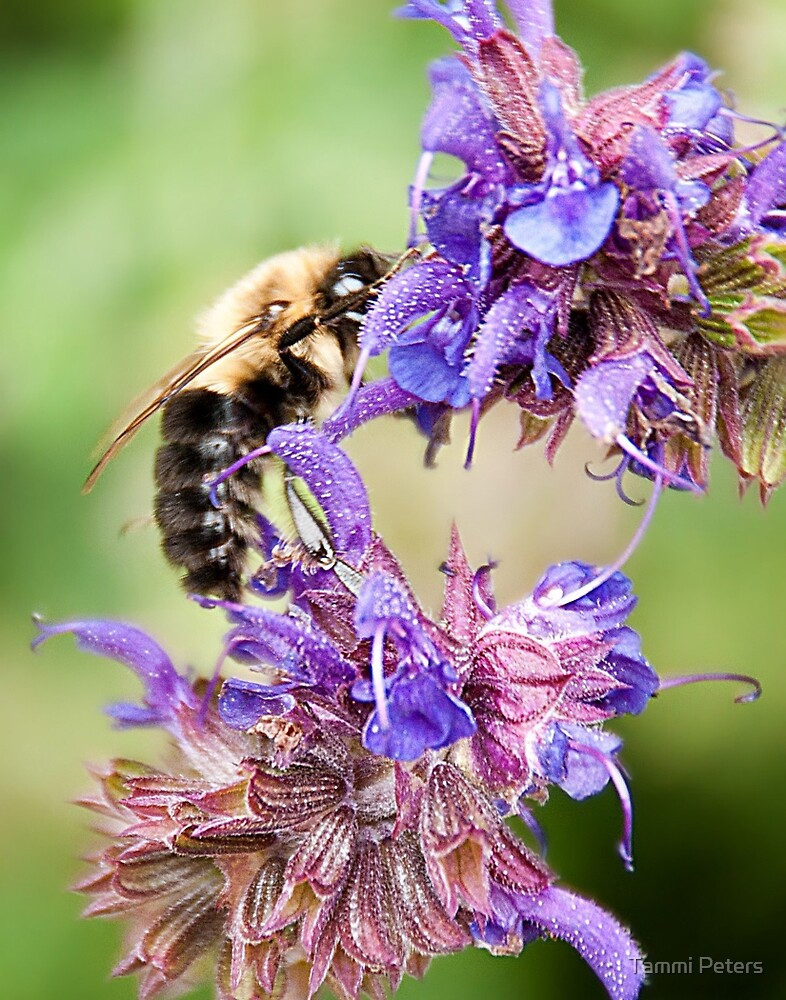 Bee and Flowers by Tammi Peters