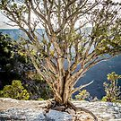 Juniper Pine - Grand Canyon by eegibson