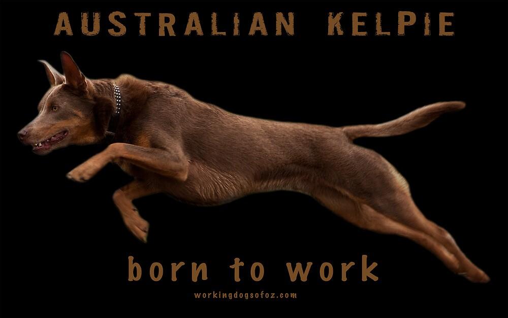 Australian Kelpie - born to work by Bill  Russo