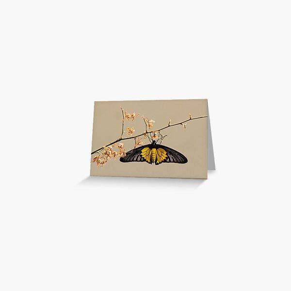 Yellow birdwing butterfly Greeting Card