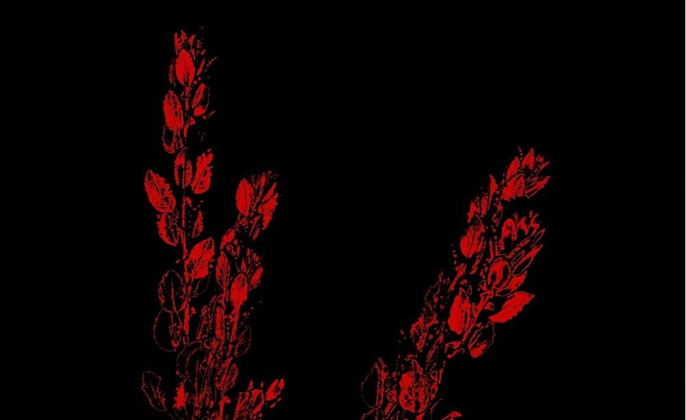 Red on Black by SusanHope