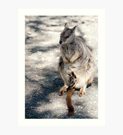 Peekaboo - Mareeba rock wallaby Art Print