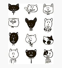 Set of cats heads.  Photographic Print