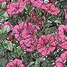 Jamboree Petunias 2 by © CK Caldwell IPA