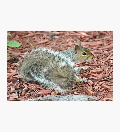 Fuzzy Tail Photographic Print