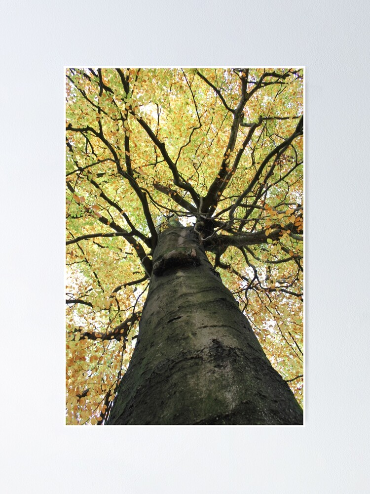 Alternate view of Treetop from Below Poster