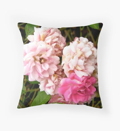 Governor General's rose 4 Throw Pillow