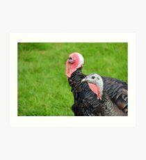 Turkeys... Art Print