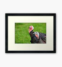 Turkeys... Framed Print