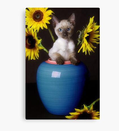 Sunflower Scratch Canvas Print