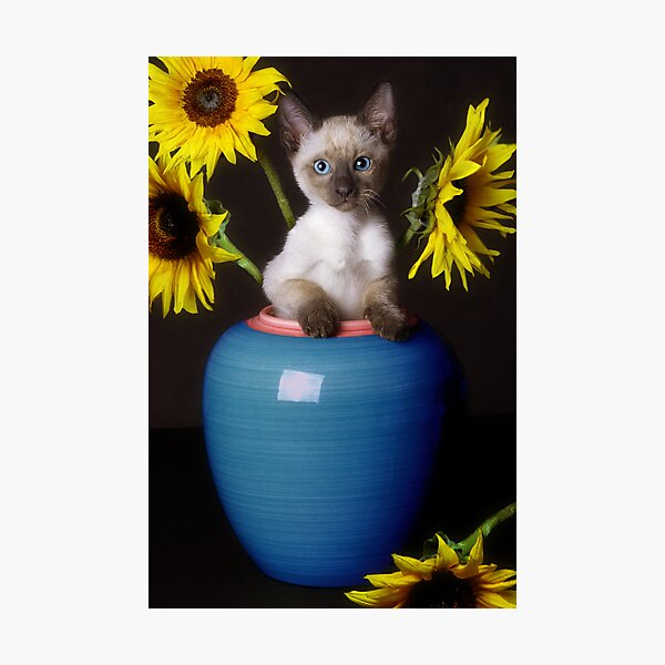 Sunflower Scratch Photographic Print
