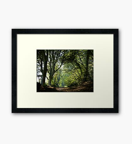 Early Autumn at Rookery Wood Framed Print