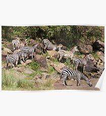 """zebra crossing"" Poster"