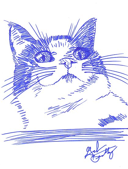 Chester the Cat by Graham Beatty