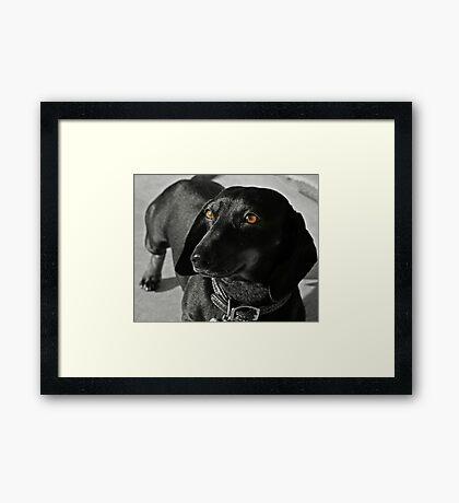 Grace the Dachshund Framed Print