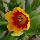 My Tulip by Lozzar Flowers & Art