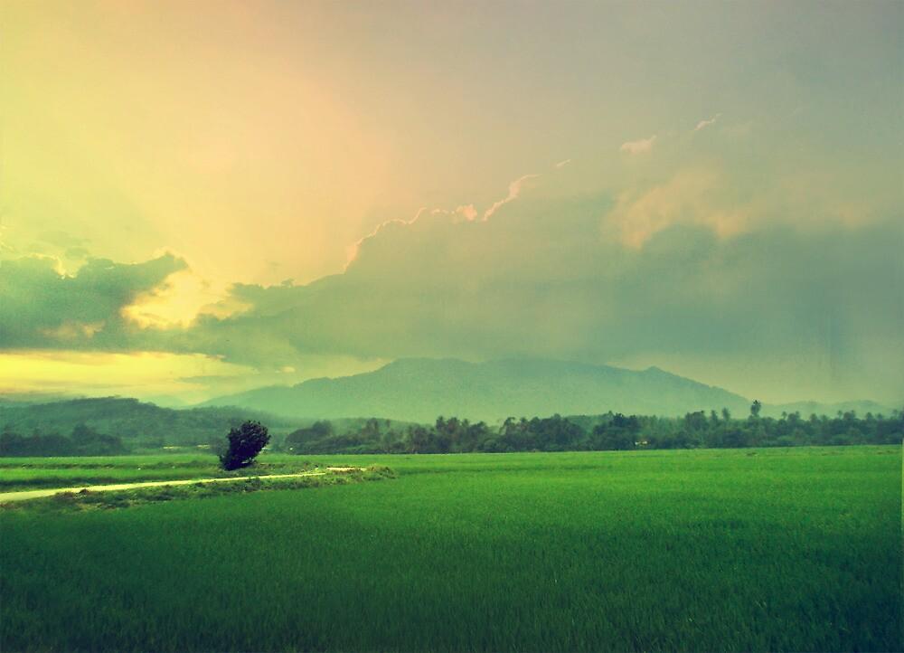 Paddy Land by Nisabutterberry