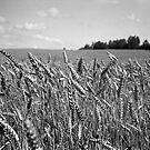 Kaut kur Kurzemē | Somewhere in Kurland by Roberts Birze
